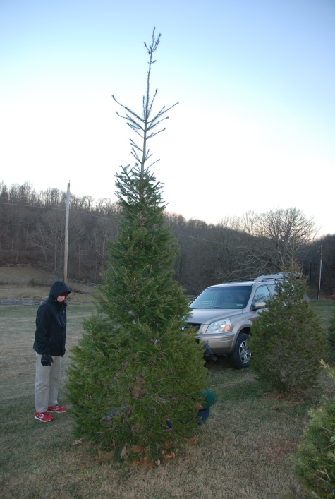 My neighbor doesn't believe in prunning his Christmas tree lot